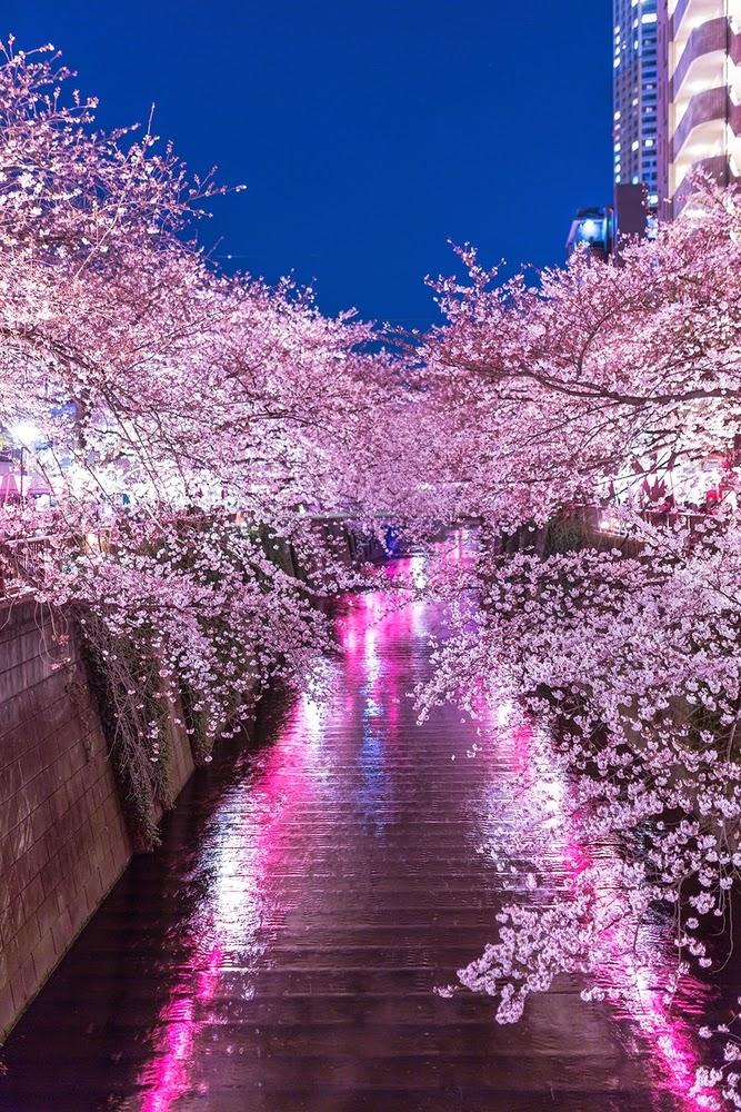 大阪商工信用金庫 0.475% 春一番キャンペーン
